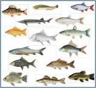 Voir l'illustration de 'ICHTYOSERV : l'ichtyodiversité comme force motrice du fonctionnement des systèmes d'élevage'