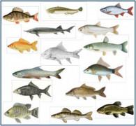 Voir l'illustration de '2 offres de stage de master 2 dans le domaine de la polyculture en étang piscicole'